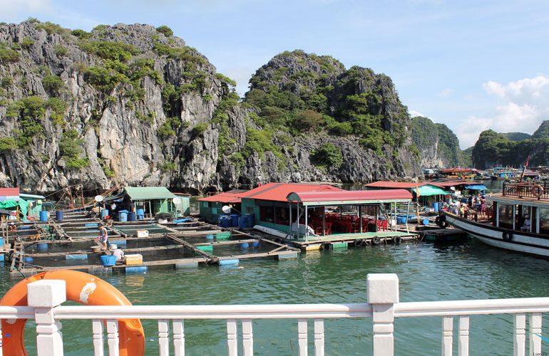 tour in lan ha bay